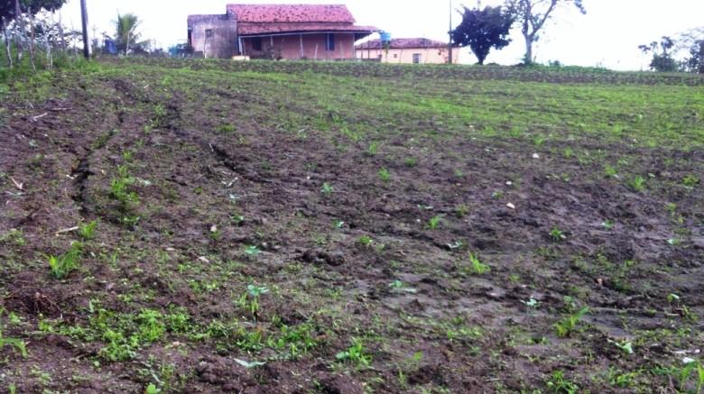 Agricultores são beneficiados com corte de terra   Foto: divulgação